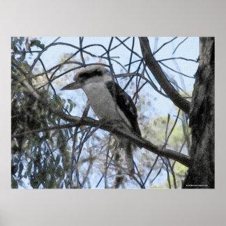 Australian Kookaburra Poster