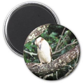 Australian Kookaburra Waiting For Food Fridge Magnet