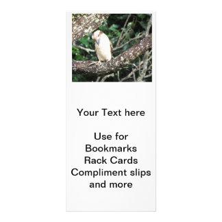 Australian Kookaburra Waiting For Food Rack Cards