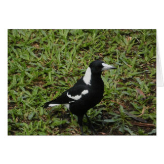 Australian Magpie Card