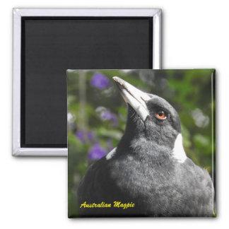 Australian Magpie Magnet