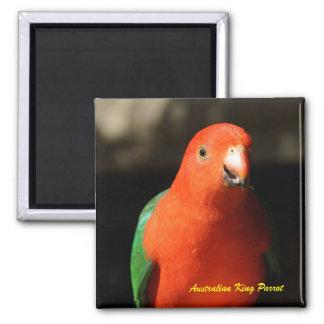 Australian Male King Parrot Magnet
