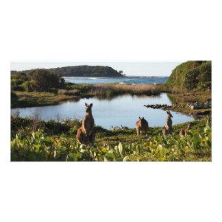 Australian Native Animal Scene Picture Card