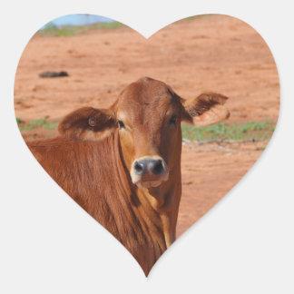 Australian outback cattle sticker