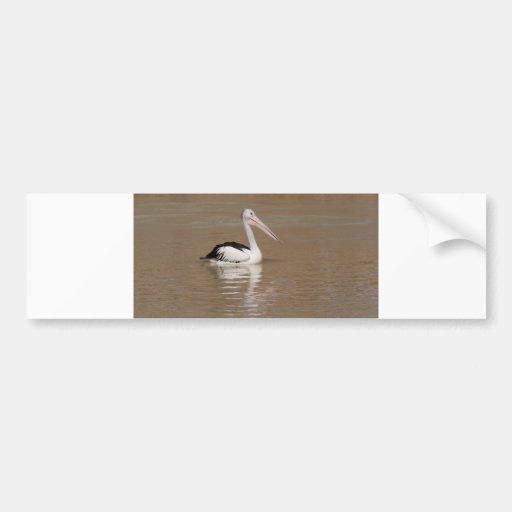 Australian Pelican Bumper Stickers
