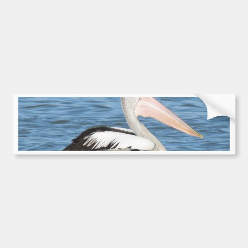Australian Pelican Bumper Sticker