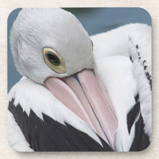 Australian pelican close up beverage coasters