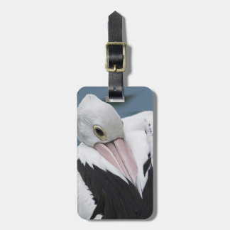 Australian pelican close up luggage tag
