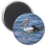 Australian Pelican Refrigerator Magnets