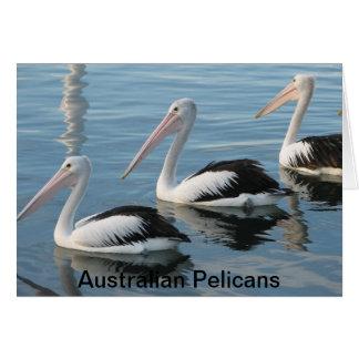 Australian Pelicans Card
