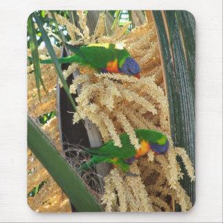 Australian Rainbow Lorikeet Mouse Pad 3