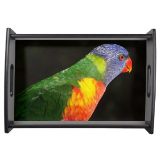 Australian Rainbow Lorikeet Serving Tray