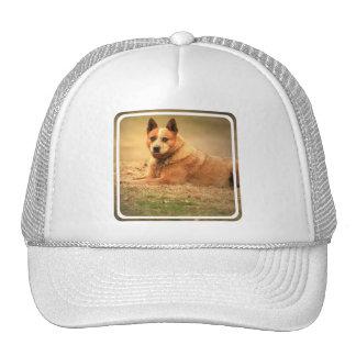 Australian Red Cattle Dog Baseball Hat