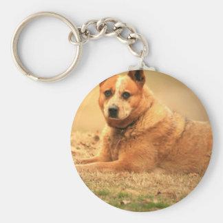 Australian Red Cattle Dog Keychain