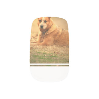 Australian Red Cattle Dog Nails Stickers