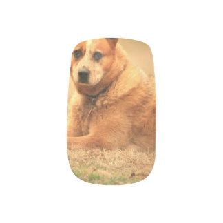 Australian Red Cattle Dog Nail Art