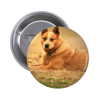 Australian Red Cattle Dog Pin