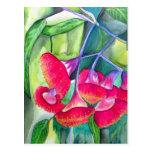 Australian red flowering gumnuts watercolor art postcard