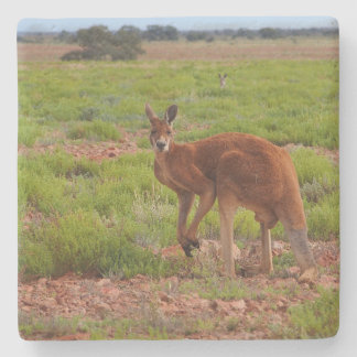 Australian red kangaroo stone coaster