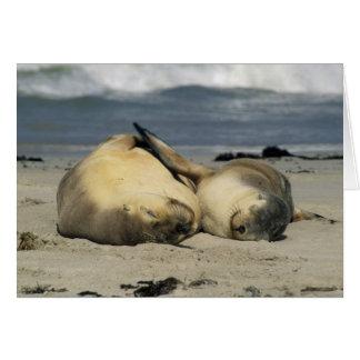 Australian Sea Lions, Neophoca cinerea), Greeting Card