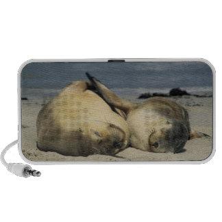 Australian Sea Lions, Neophoca cinerea), Travel Speakers