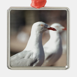 Australian seagulls at Sydney Harbour Silver-Colored Square Decoration