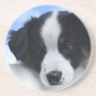 Australian Sheepdog Puppy Coaster