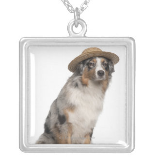 Australian Shepherd (10 months old) wearing a Silver Plated Necklace