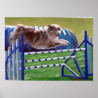 Australian Shepherd Agility Dog Portrait Poster