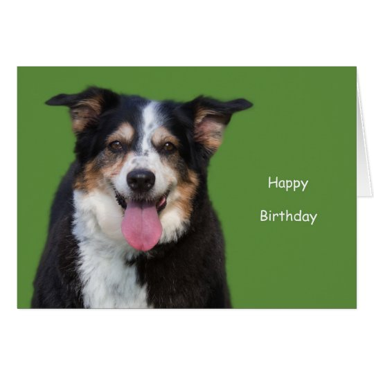 Australian Shepherd Birthday by Focus for a Cause Card