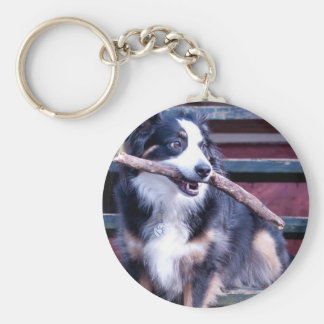Australian Shepherd Card Key Ring