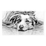 Australian Shepherd dog art Pack Of Standard Business Cards