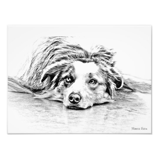 Australian Shepherd dog art Photo Print