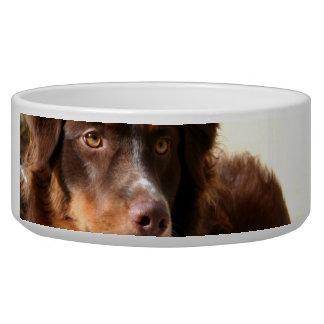 Australian Shepherd Dog Food Bowl