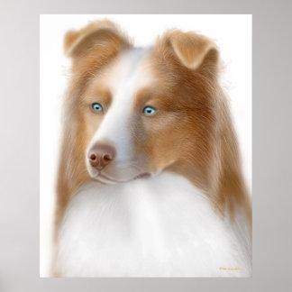 Australian Shepherd Dog Print