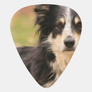Australian Shepherd Guitar Pick