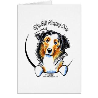 Australian Shepherd IAAM Card