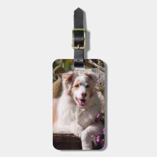 Australian Shepherd lying on garden stairs Luggage Tag