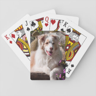 Australian Shepherd lying on garden stairs Playing Cards