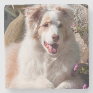 Australian Shepherd lying on garden stairs Stone Coaster