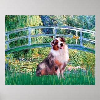 Australian Shepherd (merle) - Ophelia Seated Poster