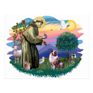 Australian Shepherd (merle) Postcard