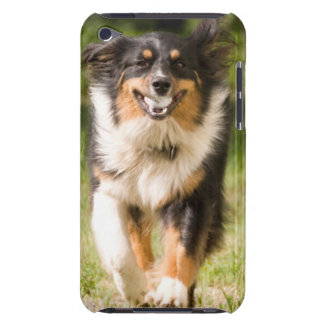 Australian Shepherd Playing With Ball iPod Case-Mate Cases