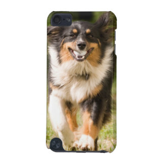 Australian Shepherd Playing With Ball iPod Touch (5th Generation) Cover