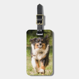 Australian Shepherd Playing With Ball Luggage Tag