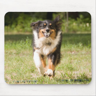 Australian Shepherd Playing With Ball Mouse Pad