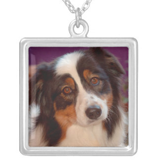 Australian Shepherd portrait Silver Plated Necklace
