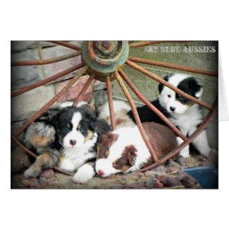 Australian Shepherd Puppies 2 Greeting Card