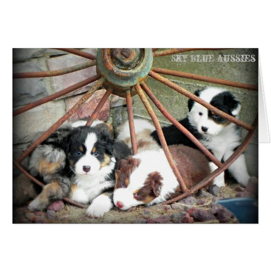 Australian Shepherd Puppies 2 Greeting Card