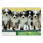 Australian Shepherd Puppies Blank Greeting Card